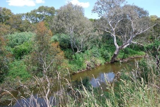 australian bush and creek
