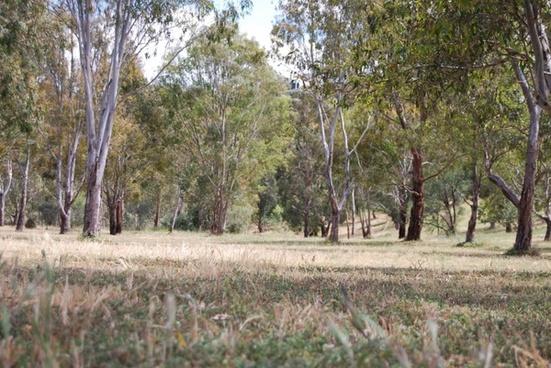 australian bush scene