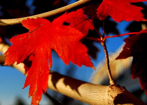 autumn 2009 3