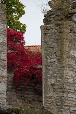 autumn among the ruins