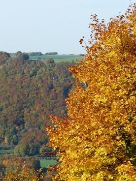 autumn autumn forest coloring
