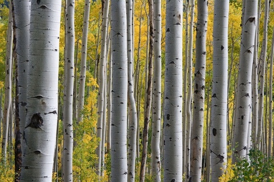 autumn background bark bright countryside ecology