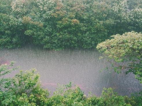 autumn background beautiful bush color environment