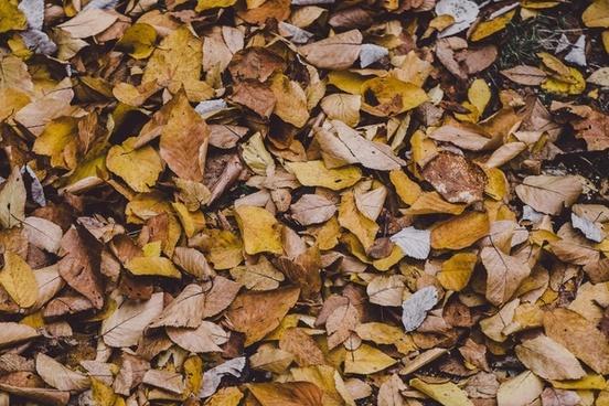 autumn background change closeup color detail fall
