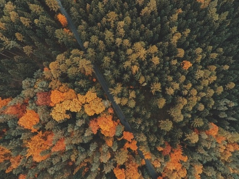 autumn background change color cropland daytime fall