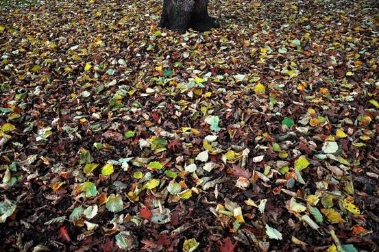 autumn background color dirt earth fall fallen