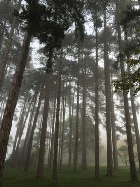 autumn backlit branch conifer environment evergreen