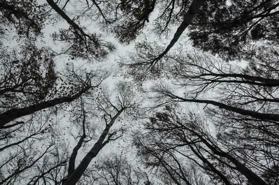 autumn bark branch contrast environment fall foliage
