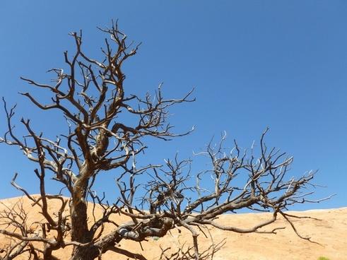 autumn barren blue sky branch dead death desert
