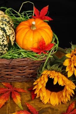 autumn basket color