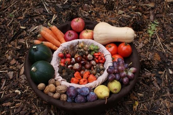 autumn basket harvest