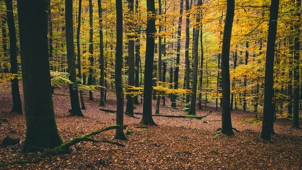 autumn beech color countryside environment fall