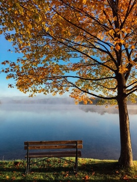 autumn bench branch calm countryside daytime fall