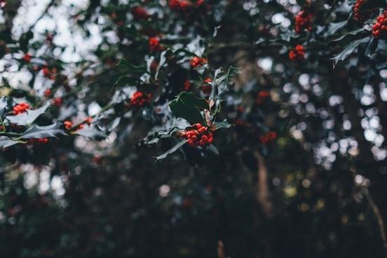 autumn berry blur branch bush decoration fall