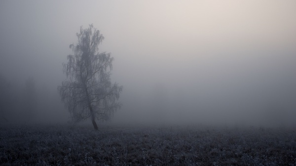 autumn black and white cold fall fog foggy forest