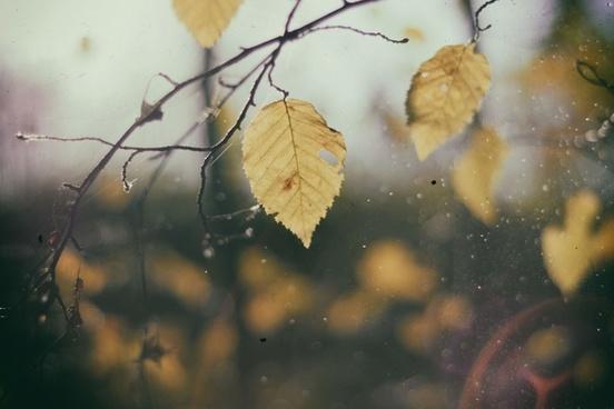 autumn blur branch change color daytime fall focus