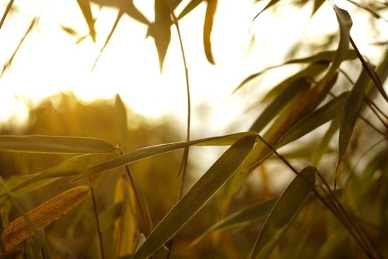 autumn blur bright color fall gold golden grass