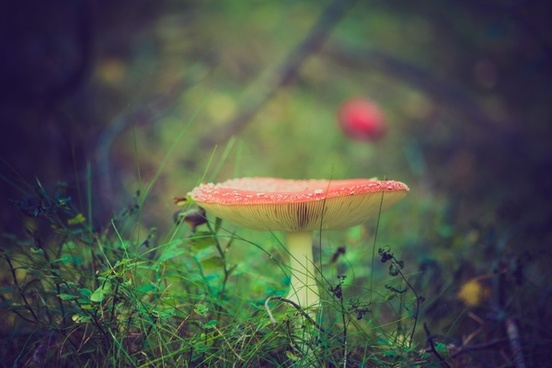 autumn blur color detail dof fall forest fungi