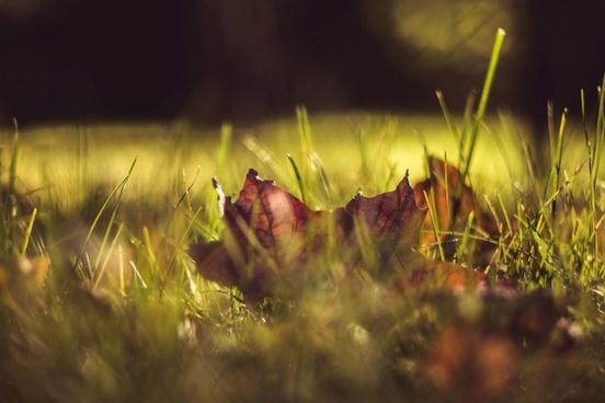 autumn blur color dew dof fall flora flower forest