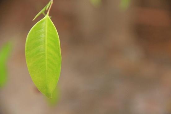 autumn blur color drop ecology environment fall