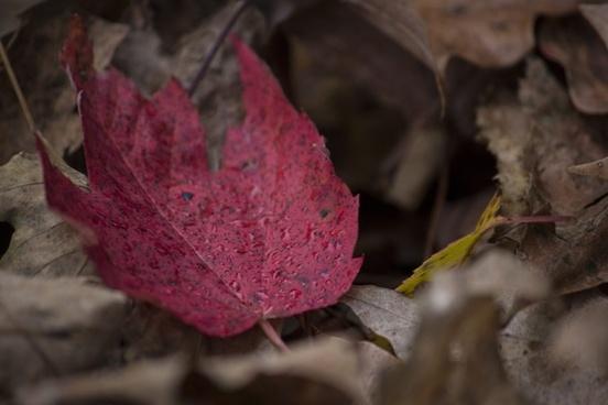autumn blur color drop environment fall flower