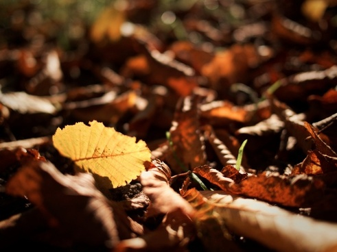 autumn blur fall fallen foliage forest fungus group