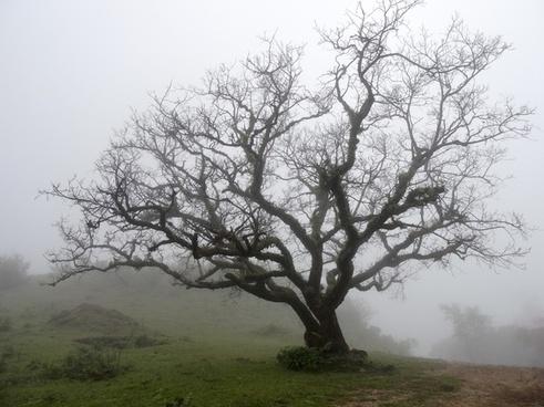 autumn branch countryside environment fall fog