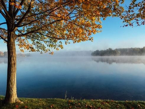 autumn branch daytime fall forest idyllic lake