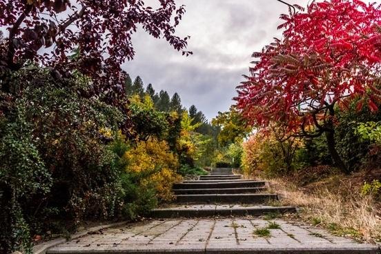 autumn branch fall flower foliage forest garden