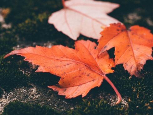 autumn bright change color fall fallen foliage