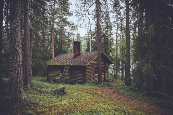 autumn building cabin conifer daytime dwelling
