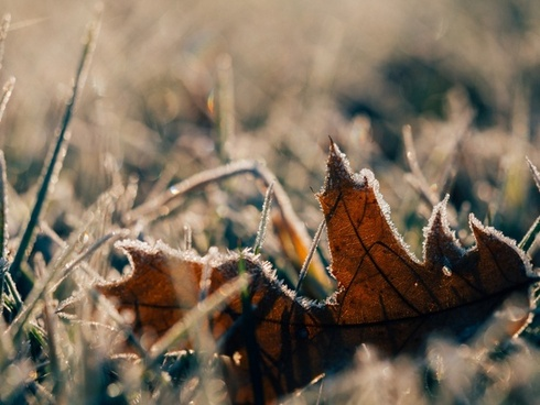 autumn butterfly closeup color dof dry fall flower