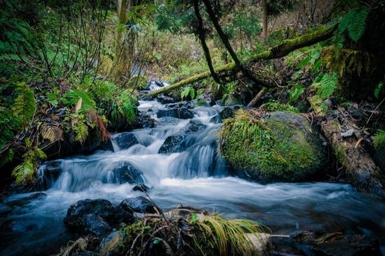 autumn cascade creek fall flow forest landscape