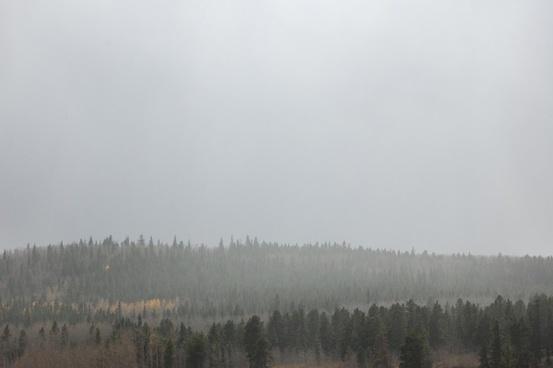 autumn cold environment fall fog forest haze