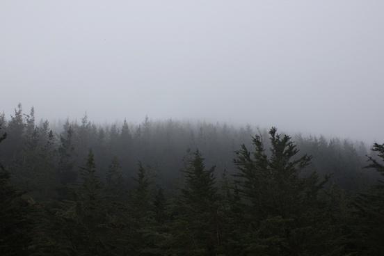 autumn cold evergreen fall fog forest landscape
