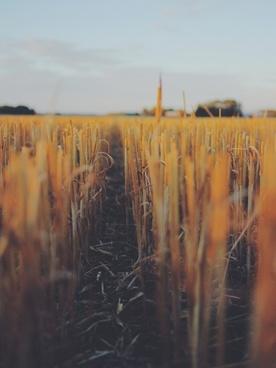 autumn color fence gold golden grass landscape