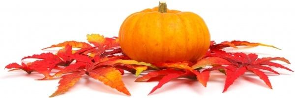 autumn colorful fall