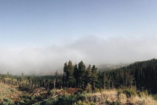 autumn conifer daytime environment evergreen fall