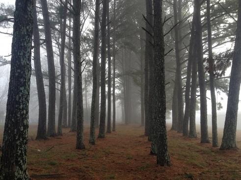 autumn conifer evergreen fall fog foggy forest