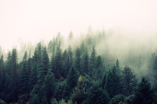 autumn conifer evergreen fall fog foggy forest haze