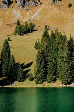 autumn conifer evergreen fall forest grass lake