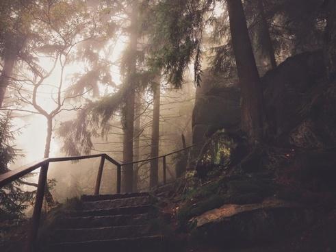 autumn conifer fall fog foggy forest haze landscape
