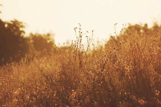 autumn country dawn fall field forest gold golden