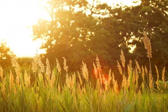 autumn countryside dawn fall field gold golden