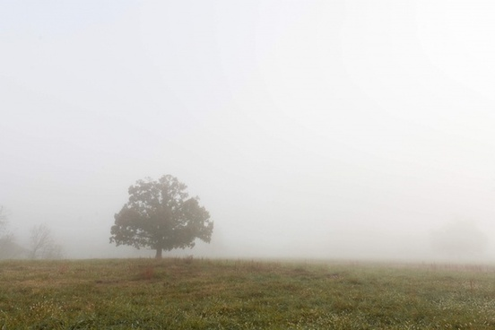 autumn countryside environment fall field fog forest