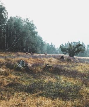 autumn countryside environment forest grass grassland