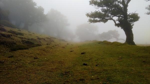 autumn countryside fall fog forest grass hill