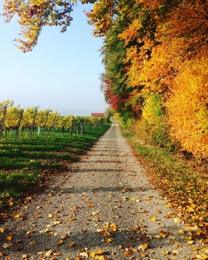 autumn countryside fall foliage grass landscape