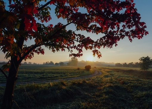 autumn countryside fall landscape leaves morning