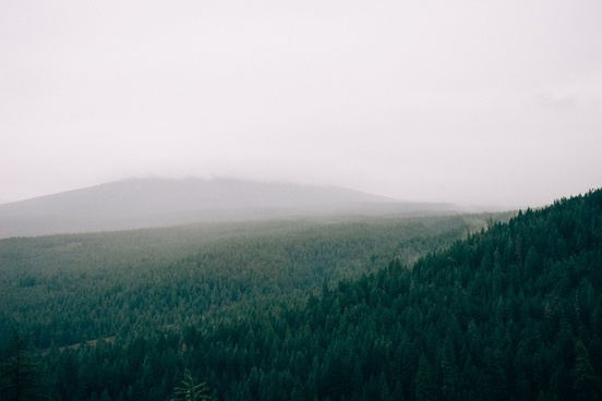 autumn dawn fall fog foggy forest grass haze